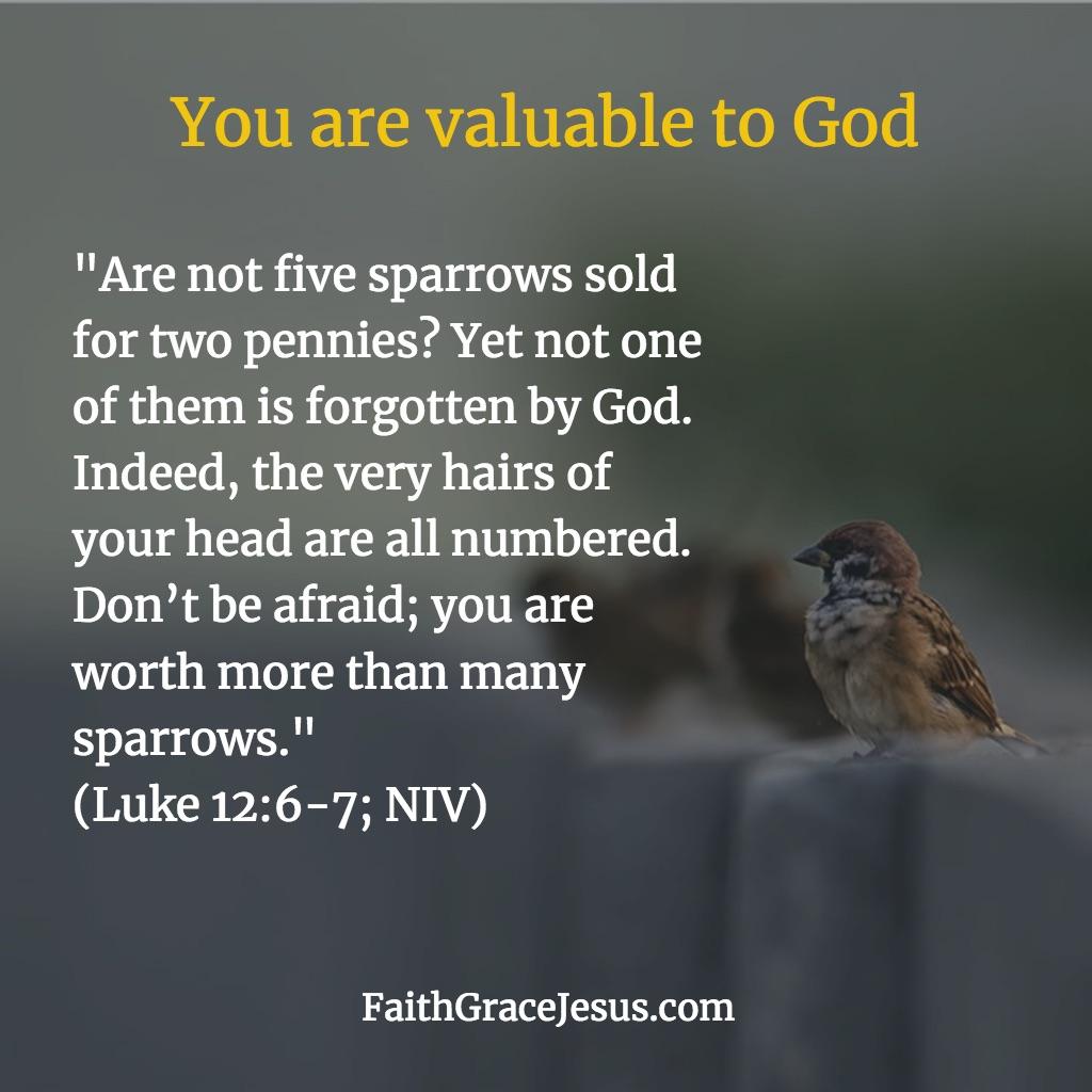 Luke 12:6-7 (NIV)